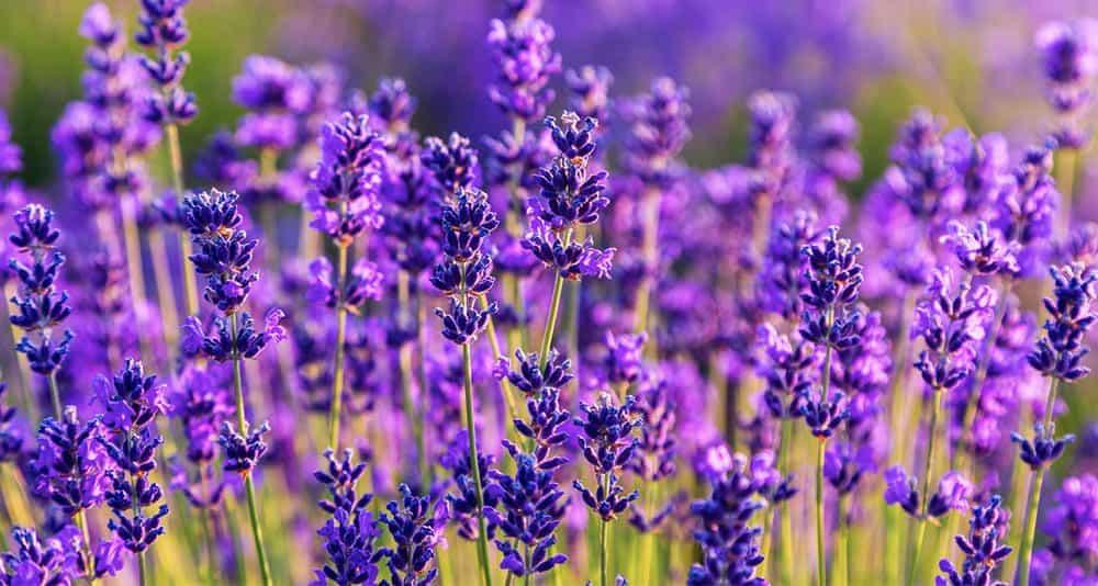 Natural Sleep Aid Herbs